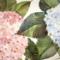 HYDRAGEA FLOWER EVA APPLE OF DESIRE